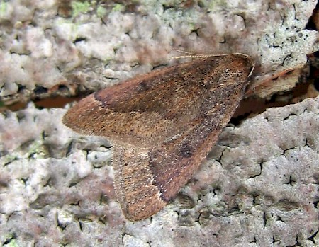 Early Moth Theria primaria