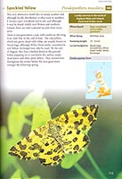 Britain's day-flying moths (internal page)